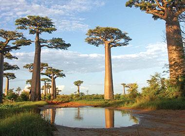 Circuits à Madagascar