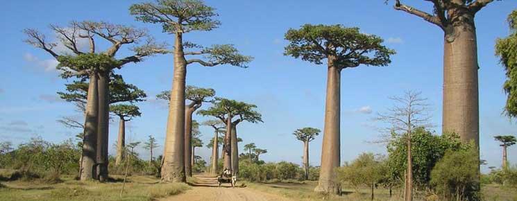 Les circuits individuels et sur mesure à Madagascar