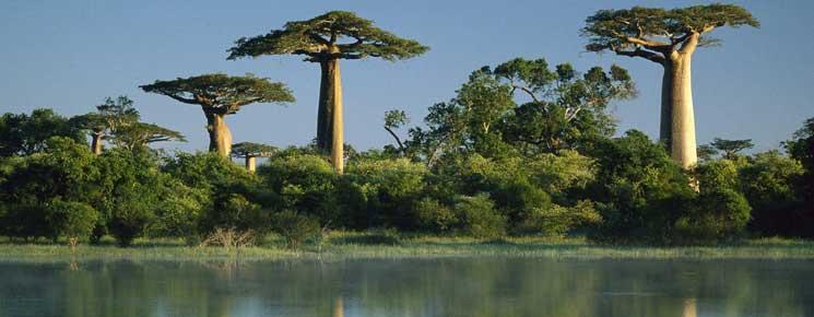 Visiter les parcs nationaux à Madagascar